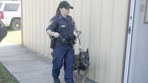 HONING SKILLS: Kristi Boyd with the Pearl River County Sheriff's Department is a K-9 handler. Tuesday she and other handlers with the department used a local business as a training ground. Photo by Jeremy Pittari