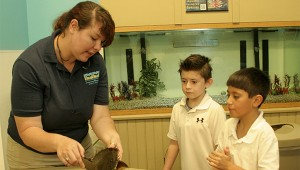 Nicole Liles is zoology and psychology major at Mississippi Gulf Coast Community College. She has worked at the Institute for Marine and Mammal Studies for the past three years. During the PRC Upper Elementary tour, Liles educated students about horseshoe crabs. Photo by Cassandra Favre